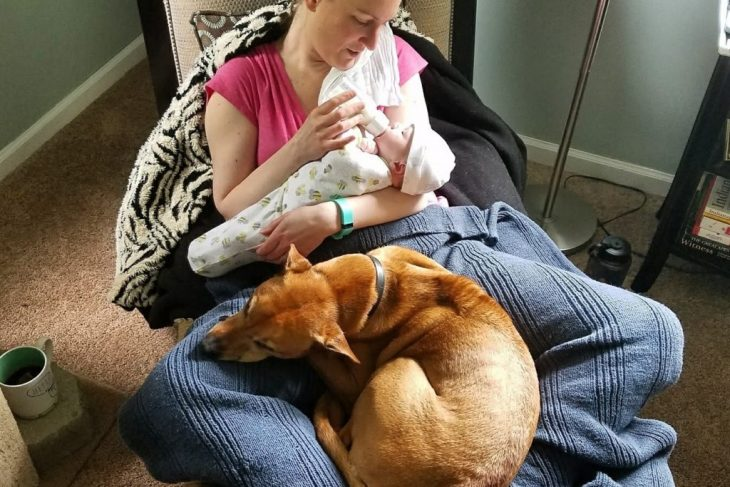 Pet dogs and Infants: Can everyone get alongside?