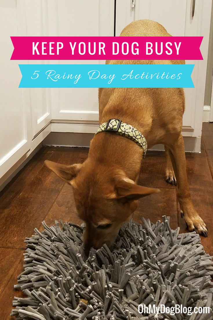 How to Keep Your Dog Busy on a Rainy Day_ 5 Indoor Activities